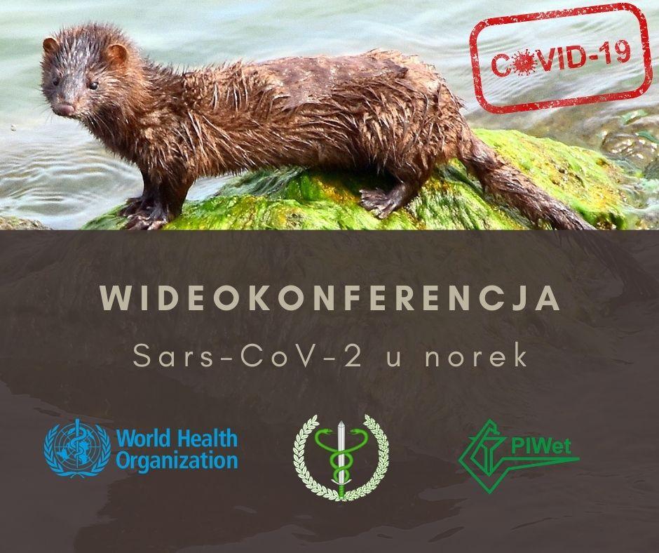 World Health Organization - pierwsze zakażenie Sars-CoV-2 u norek w Polsce