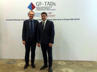 Udział Zastępcy Głównego Lekarza Weterynarii, Pana Pawła Niemczuka, w 14tym posiedzeniu Stałej Grupy Ekspertów ds. ASF w Europie (GF TADs)