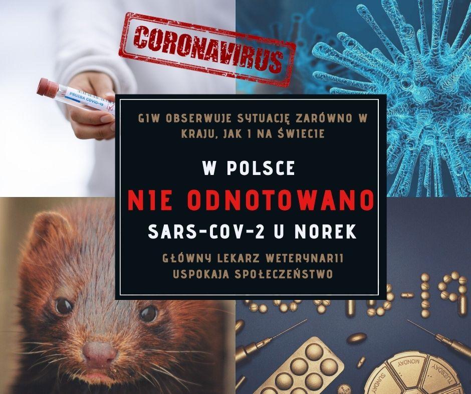 Koronawirus i norki