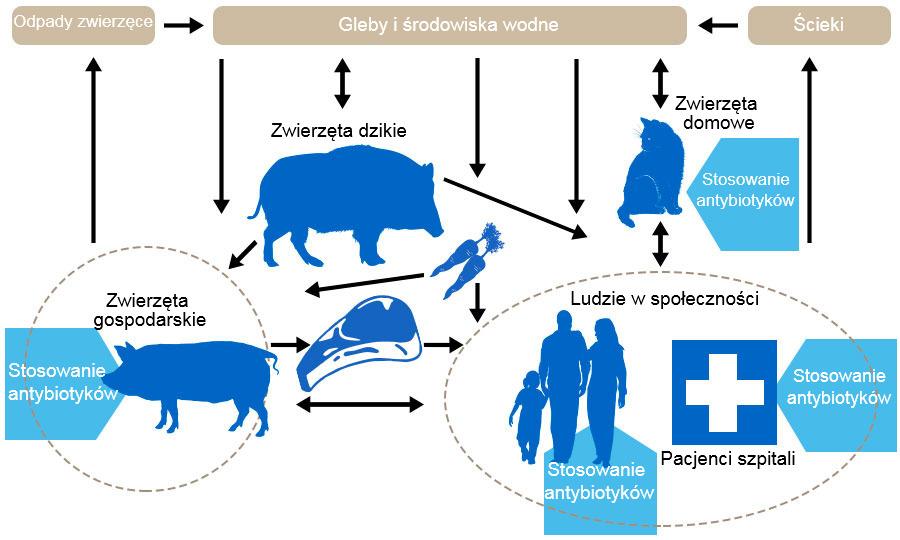 Światowy Tydzień wiedzy o antybiotykach
